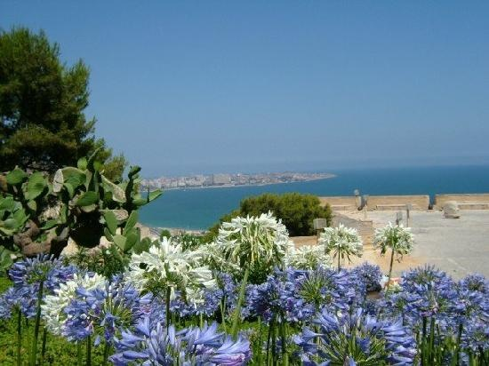 Gran Alacant in bloom! Gran Alacant is a beach town on the Costa Blanca in Spain