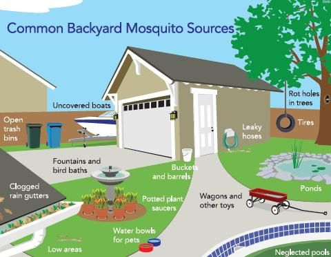 Anything That Will Hold Water For More Than A Few Days Can Breed Mosquitoes.  Drain Any Standing Water On Your Property To Reduce Your Risk Of  Contracting ...