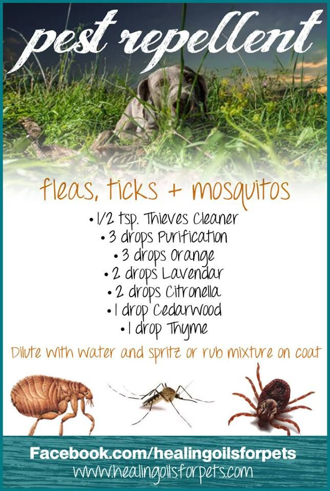 Pest Repellent for Pets Young Living Thieves Cleaner, Purification, Orange, Lavender, Cedarwood, Thyme, Citronella