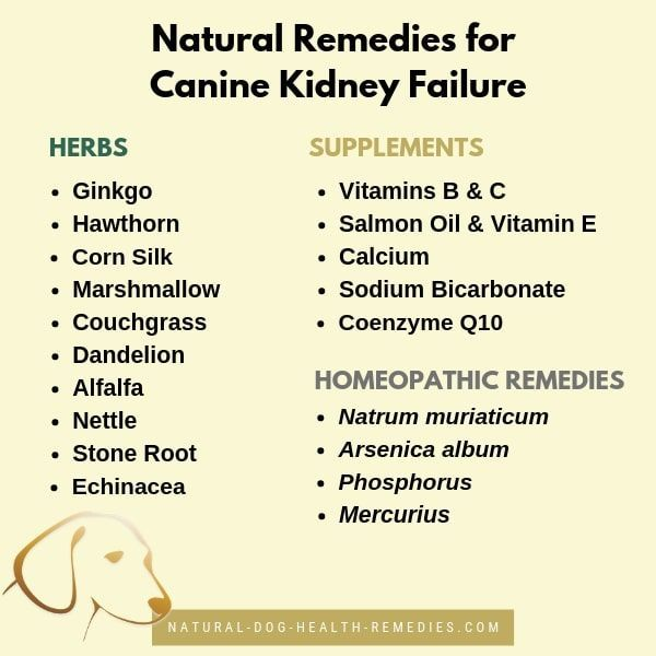Use These Natural Remedies To Help A Dog With Chronic Kidney Failure Doghealth Dogcare Dogs Health Remedies Pet Insurance Reviews Chronic Kidney Failure