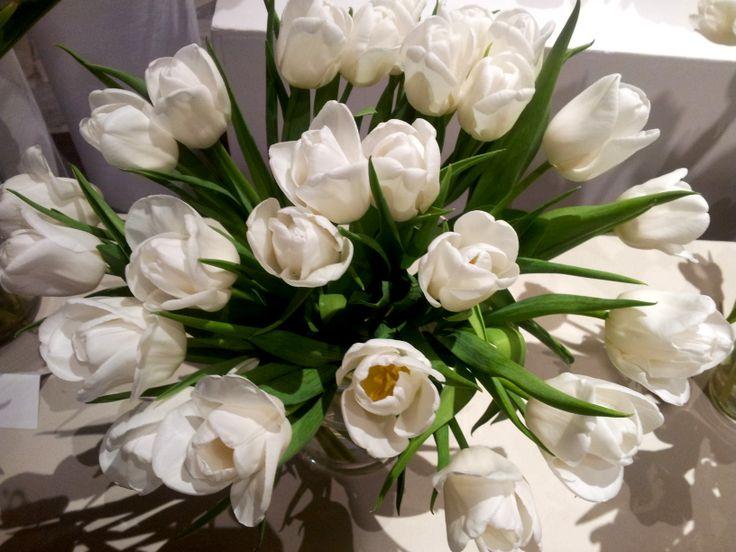 White desire tulips
