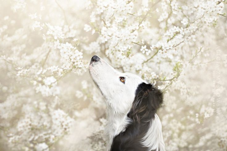 Nobody Ever Did Such Beautiful Portraits of Dogs, Inspiration, Photography, Animals, Portraits, Artnaz.com