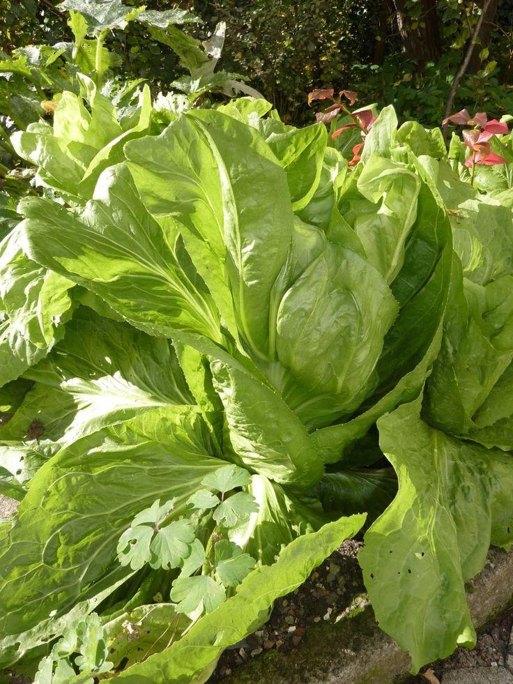 1314 Best Images About Gardening On Pinterest Gardens 400 x 300