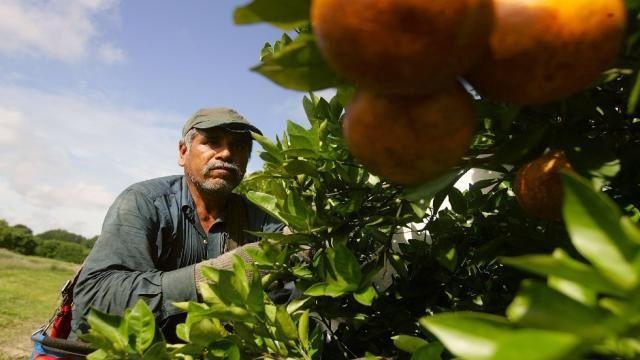 Bush 43's bankrupt 'Let them pick cotton' immigration policy
