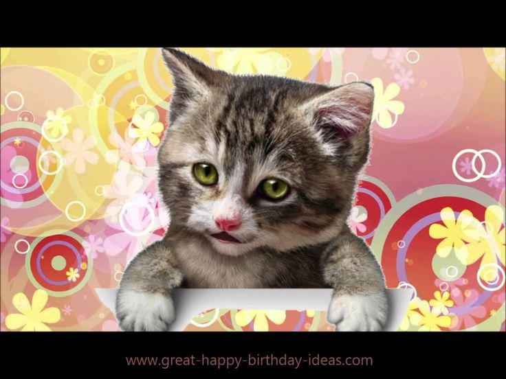 The Kitten Birthday Rap!The perfect card to wish a rapping happy birthday, share with all your friends and family. https://youtu.be/jP7Dv4uDYsI