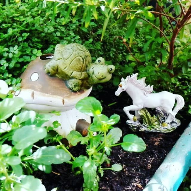 video #fairygardenscapetown #fairygarden #capetown #miniature #magic #fairytale #fantasy