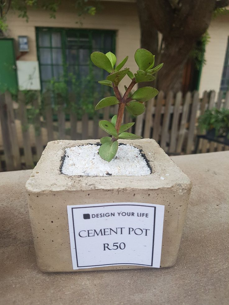 #cementpots available to #order #pots #plants