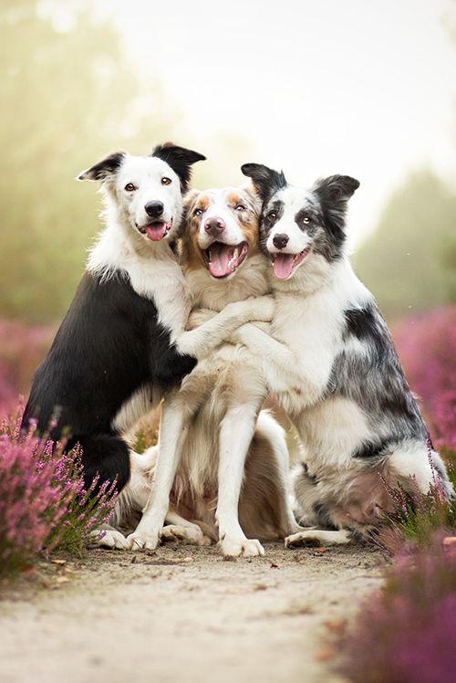 ~Three Friends