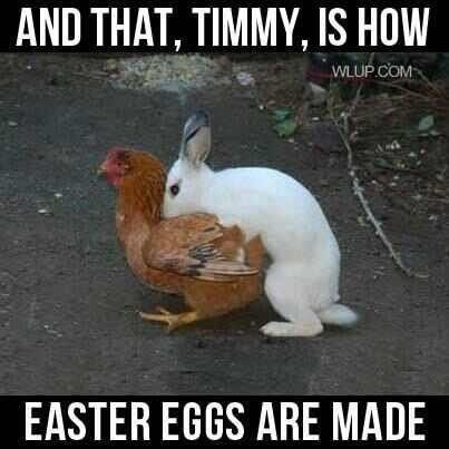 Where Easter eggs come from - The People's Funny Pictures Blog - Quora