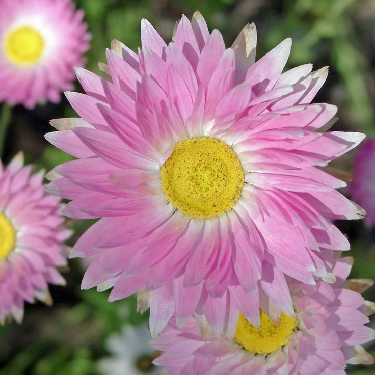 1000  images about flowers