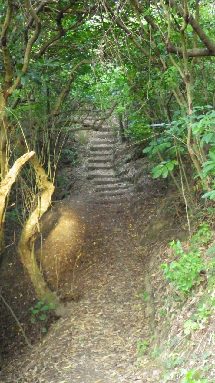 Nice little walking track near wowsurfschool.com