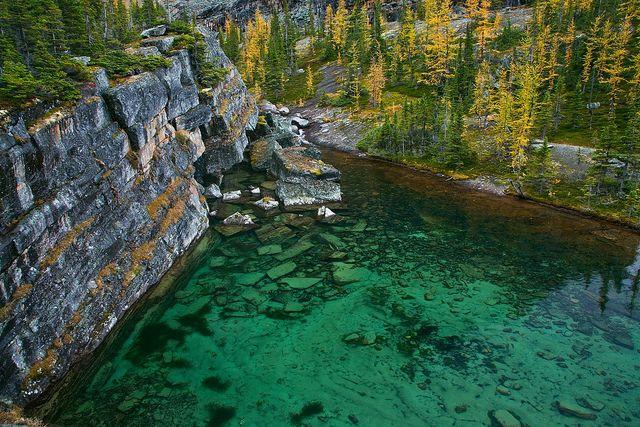 Beautiful aqua Victoria Lake with autumn Alpine Larches (Larix lyallii) along the Lake Oesa Trail in Yoho National Park, British Columbia,