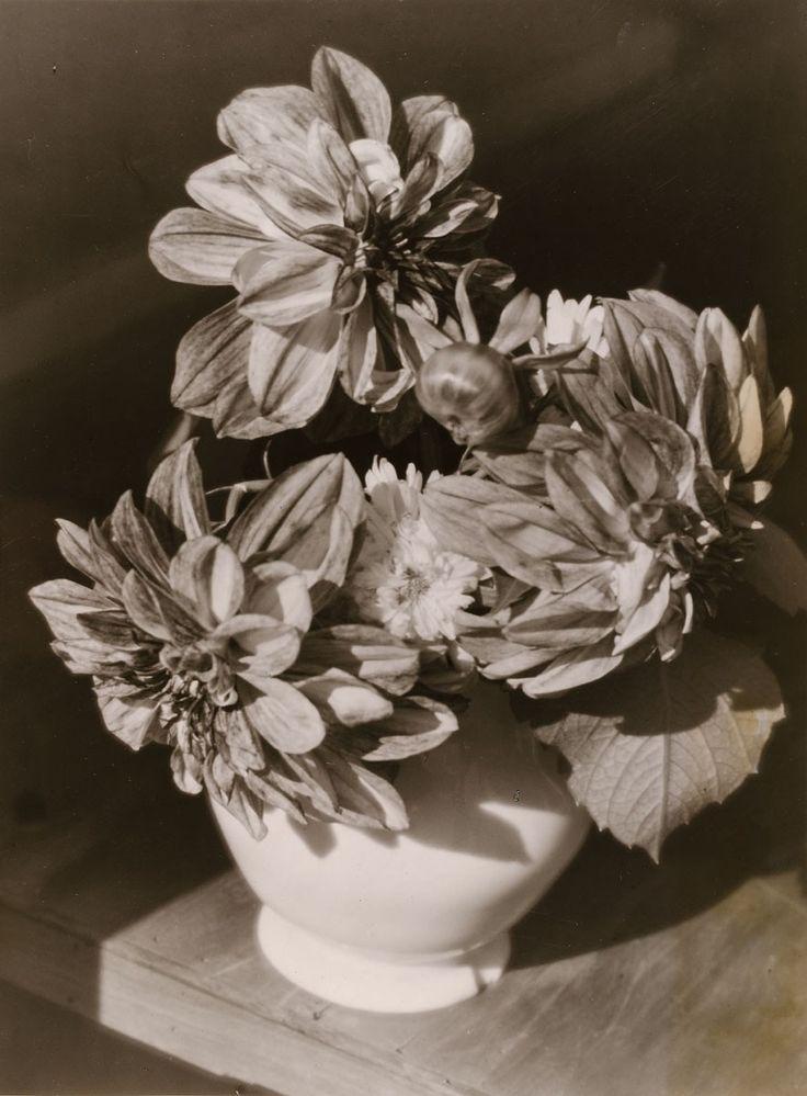 Blumenstillleben (Kaktusdahlien) | Heinrich Kühn | c.1930 | Museum Für Kunst Und Gewerbe Hamburg | CC0