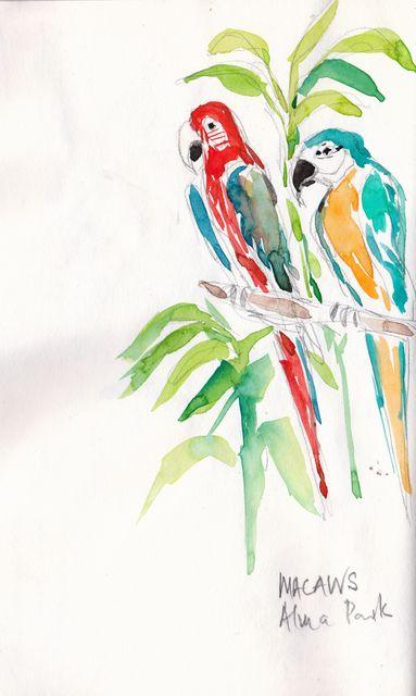 Macaws at Alma Park Watercolour in S&B Alpha sketchbook -  © 2013 Carol Lee Beckx