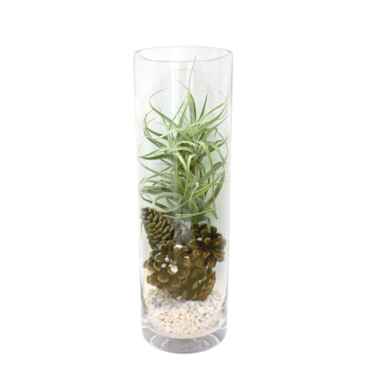 Images about terrarium on pinterest