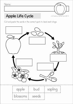 Apple Life Cycle unit. Includes: posters, classroom big book, student cut and paste life cycle booklets, 4 no prep worksheets.