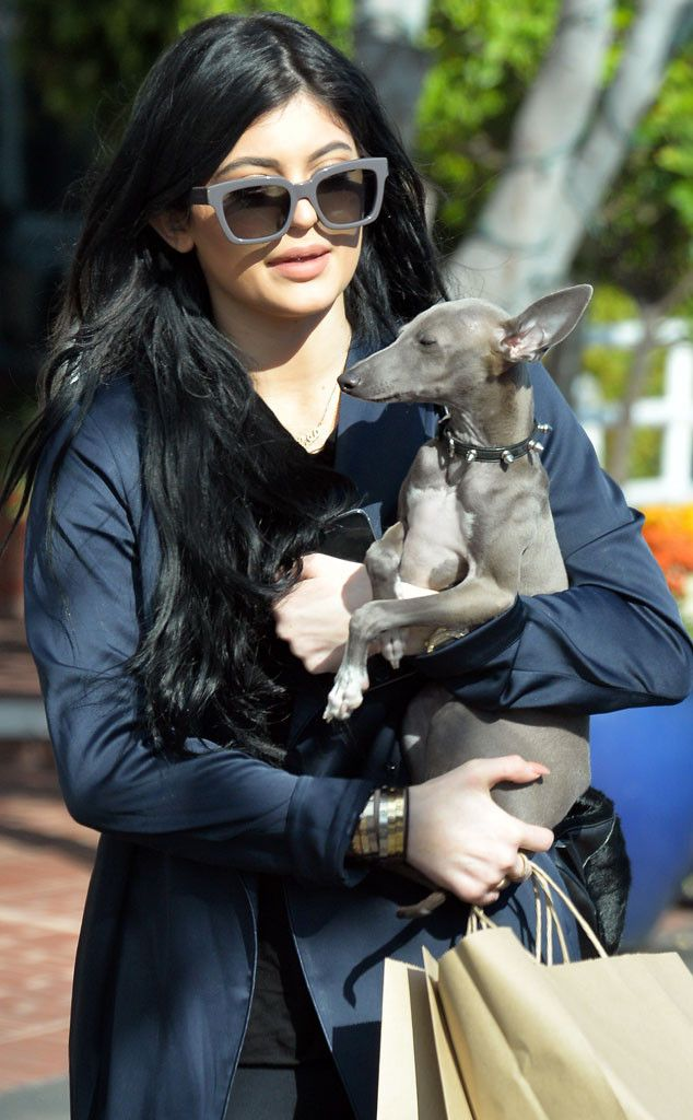 Kylie Jenner Makes a Mini Music Video Dedicated to Her Dogs—Watch Now!  Kylie Jenner