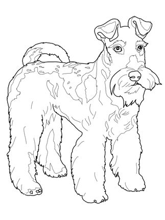 Click to see printable version of Wire Fox Terrier
