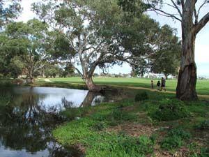The Naracoorte Creek Walk is a walk track roughly 5km long through the Naracoorte township. #walking #Naracoorte #creekwalk