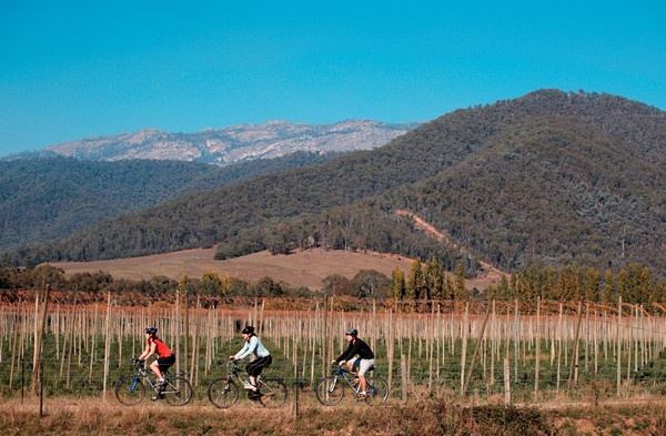 Bright to Myrtelford, VIC, Australia. Murray to Mountains Bike Trail