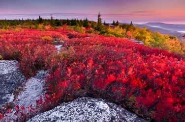Dolly Sods Wilderness, WV: Favorite Places, Nature, West Virginia, Sods Wilderness, Landscape, Photography