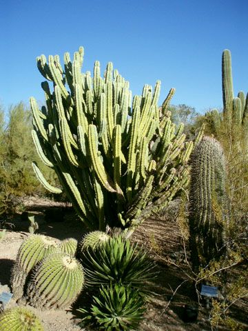 アリゾナ州フェニックスの名所。砂漠植物園
