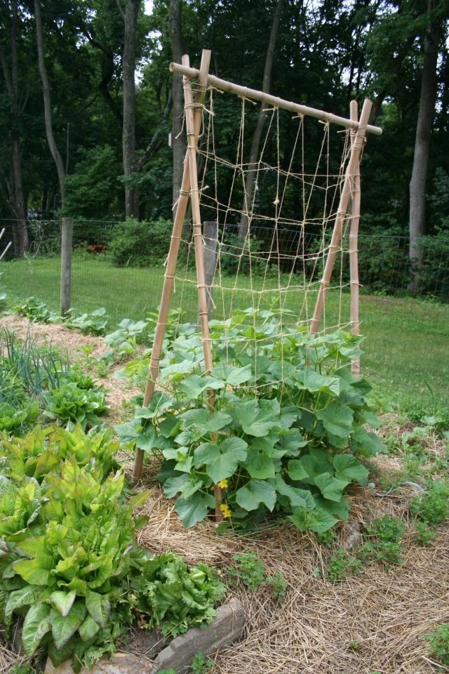 17 best images about vegetable garden on pinterest for Vegetable garden trellis designs