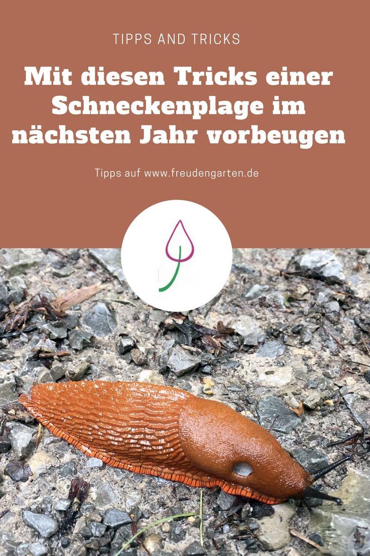 Im Herbst kannst du Schnecken effektiv für das nächste Jahr bekämpfen. #Schnecken #Garten #Gartentipps #garden #gardentip