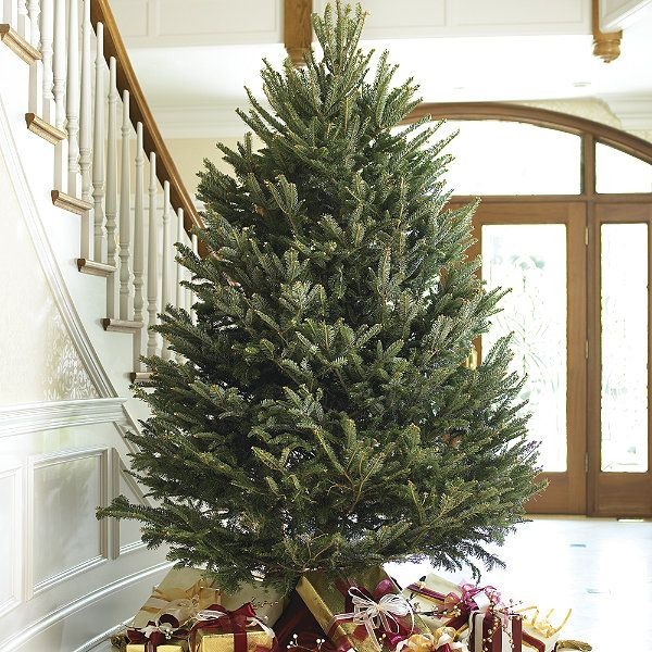 Real Fresh-cut Fraser Fir Christmas Trees -- nothing can take its place!  I love the smell and feel of a real tree!