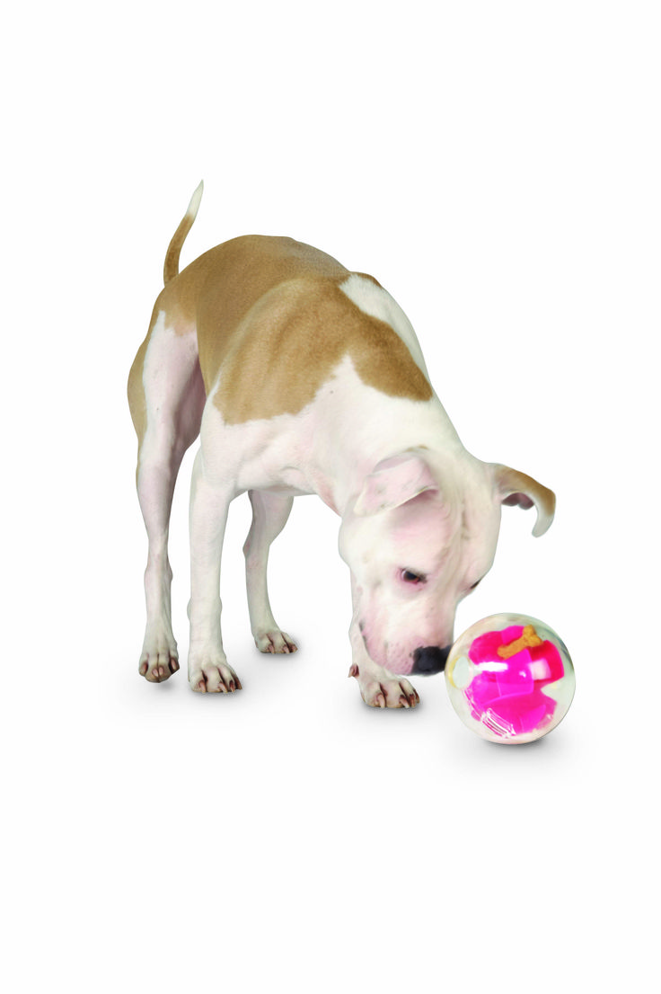 Check Out This Toy! The Planet Dog Mazee Makes Playing More Awesome Than  Ever!