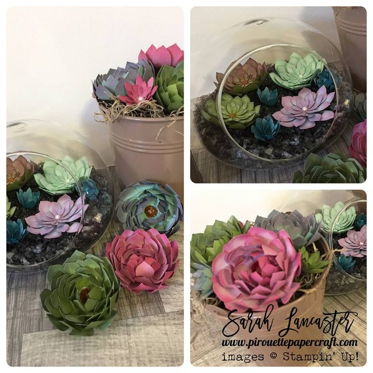151 Best Stampin Up Oh So Succulent Images On Pinterest