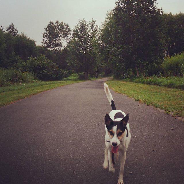 今日はいつもより早起きでお散歩。#こむぎ #元保護犬 #中型犬 #雑種犬 #愛犬 #お散歩 #朝活 #ウォーキング #健康 #早寝早起き #AM5:00 #犬のため #田舎 #森林 #自然 #道 #北海道