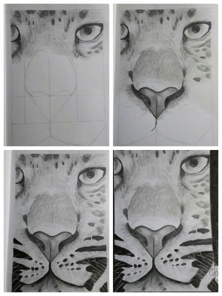 Tiger. Using both charchoal and graphite.