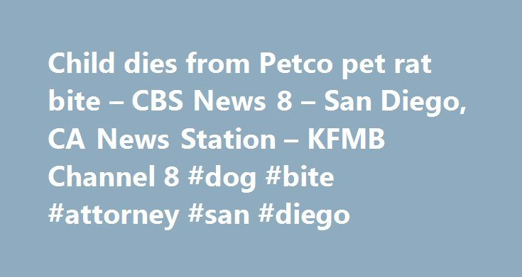 Child dies from Petco pet rat bite – CBS News 8 – San Diego, CA News Station – KFMB Channel 8 #dog #bite #attorney #san #diego http://florida.remmont.com/child-dies-from-petco-pet-rat-bite-cbs-news-8-san-diego-ca-news-station-kfmb-channel-8-dog-bite-attorney-san-diego/  # Child dies from Petco pet rat bite – CBS News 8 – San Diego, CA News Station – KFMB Channel 8 SAN DIEGO (CBS 8) – A judged ruled against San Diego company Petco in a case involving a ten-year old boy who died after being…