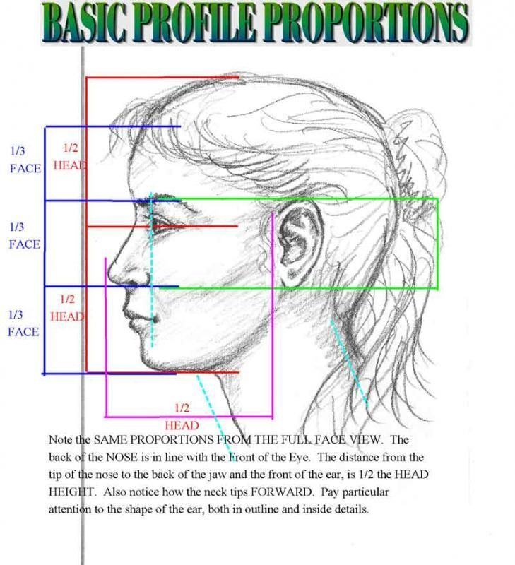 Best 25 face proportions ideas on pinterest face for Size and proportion
