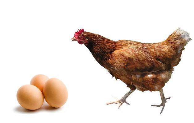 Los beneficios del Huevo de Gallina #Los beneficios del huevo de gallina #Platos Argentinos