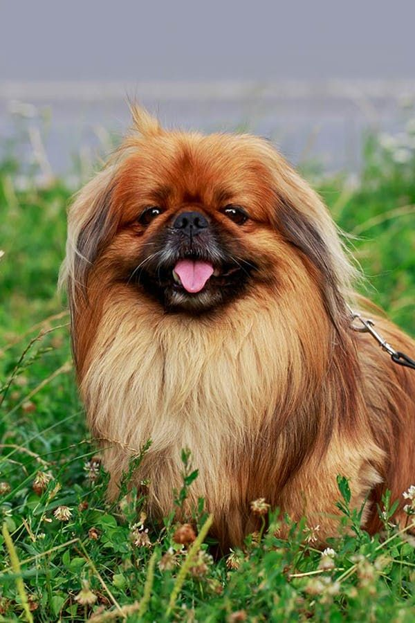 What Dog Breed Should You Get Based on Your Personality Type? #purewow #entertainment #dogs #pet #advice