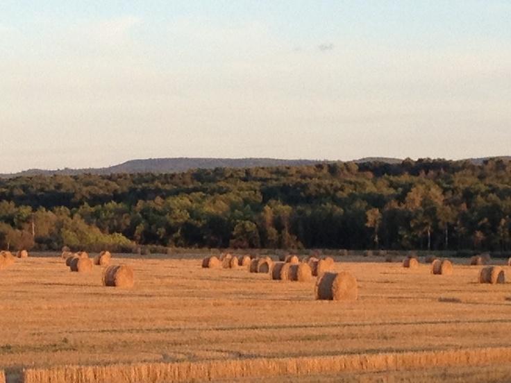 Prairie farm #GILOVEMANITOBA