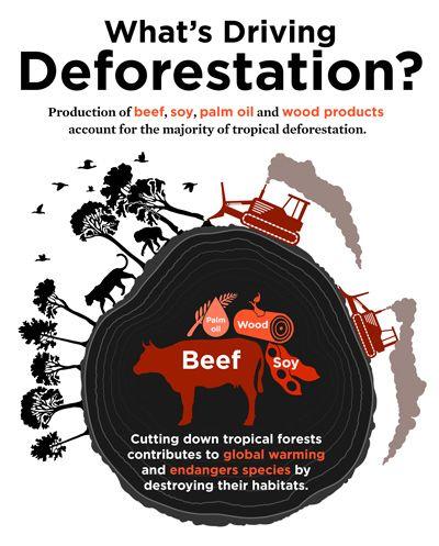En el foto, deforestacion contribuir a calentamiendo global y peligro por animales.