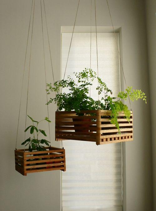Plants. More plants.