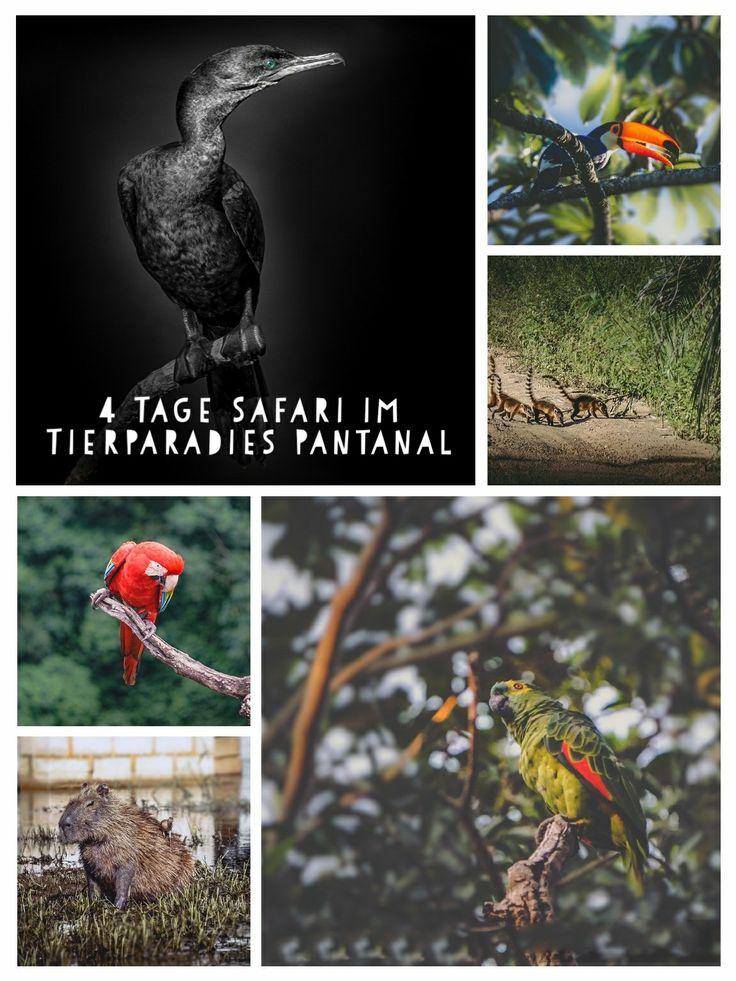 Reisebericht/Travelblog - 4 Tage Tiersafari im südamerikanischen Tierparadies schlechthin - Dem Pantanal in Matto Grosso do sul