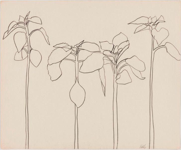 Four Sunflowers by Ellsworth Kelly, 1957