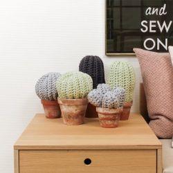 Kaktus - Virkad