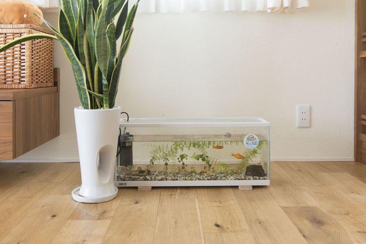 【自然素材の住宅】 夏は風通しが良く、冬は日当たりも良い、床暖房が温かい年中快適なリビング。 家族みんなものびのびできる空間に、癒しの空間をプラスしました。 ★ファーストステージ 一級建築士事務所(茨城県 水戸・つくばで設計士と建てる ちょっとカッコイイ家づくり)★
