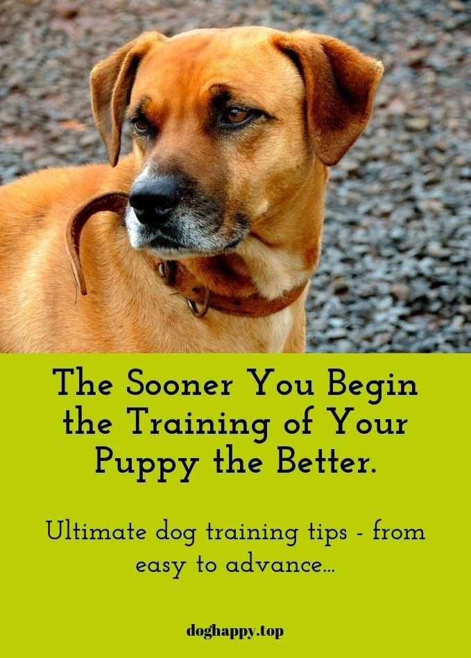 Ideas And Tips On Training Your Dog Training Your Dog Easiest