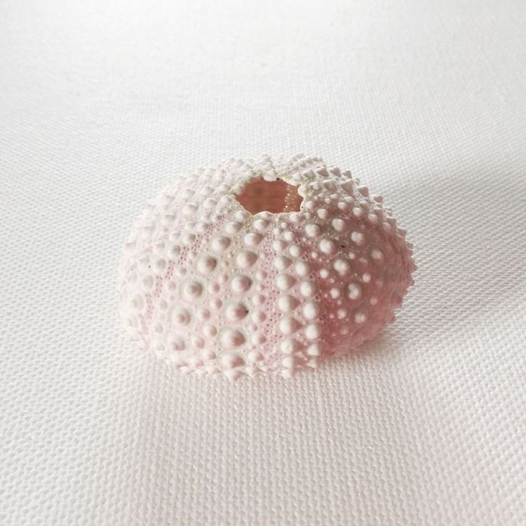 Pink Urchin Seashell, All Natural, Perfect for Beach weddings, Nautical, ocean