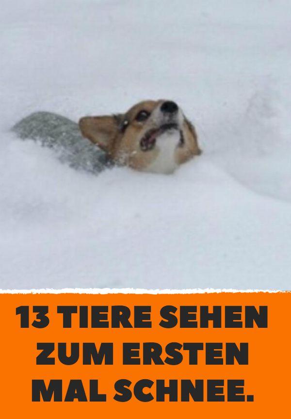 13 Tiere sehen zum ersten Mal Schnee.