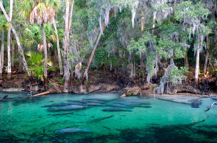 Blue Springs State Park Fl While Living In South Ga Pinterest