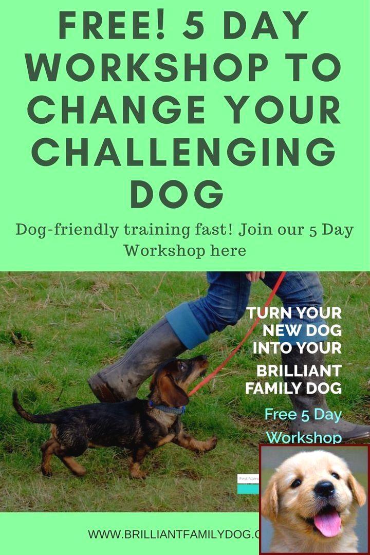 Dog Antisocial Behavior And Dog Training Courses Calgary Dog