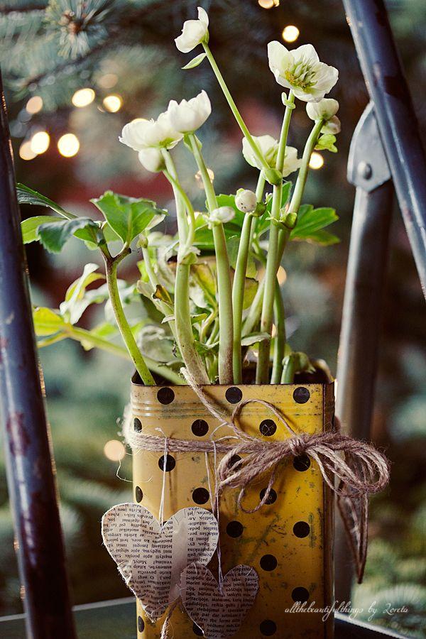 Stunning Christmas Rose-i adore this image